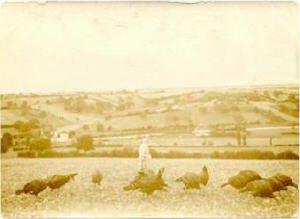 village - VieuxRonquieres001 - Une très vieille carte postale de Ronquières qui semble dater du 19eme siècle. A l'avant-plan, les dindons de Ronquières qui ont fait la renommée de l'endroit