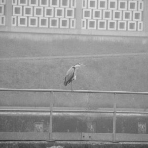 Brouillard - Ronquieres_brouillard028