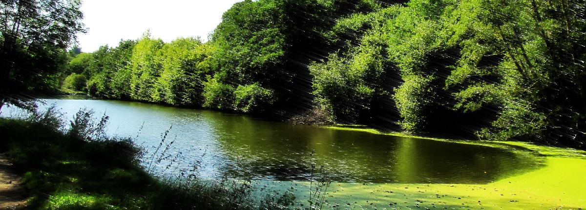 Le vieux canal en 2009