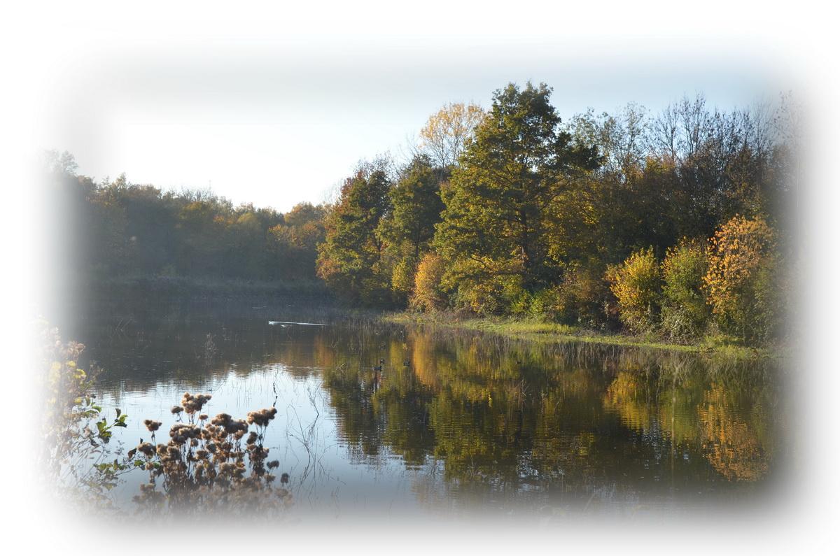 Le vieux canal à l'automne 2015